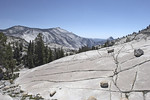 All these trees growing out of this cracked up rock.  Yes, that's the backside of Half Dome again toward the right.
